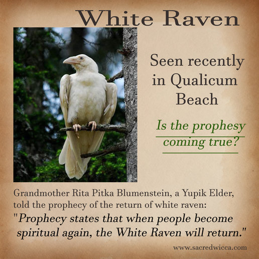 Animal Correspondences Sacred Wicca